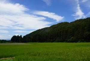 kawamurafumio_20150806a