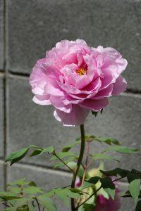kawamurafumio_20170419